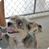 Adopt A Pet :: Cutie - Tavares, FL