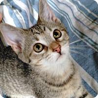 Adopt A Pet :: Pebbles - Sheboygan, WI