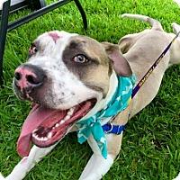 Adopt A Pet :: Adia - Baton Rouge, LA