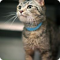Adopt A Pet :: Savannah - Appleton, WI