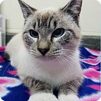 Adopt A Pet :: McDuff - Washington, GA