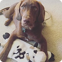 Adopt A Pet :: Charlie (COURTESY POST) - Baltimore, MD