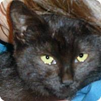 Adopt A Pet :: Sweet Pea - Wildomar, CA