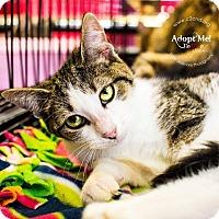 Adopt A Pet :: A..  Jasmine - Mooresville, NC