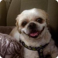 Adopt A Pet :: Max - Codorus, PA