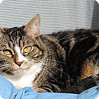 Adopt A Pet :: Sox - Palmdale, CA