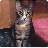 Adopt A Pet :: Venus (KM) - Cypress, TX
