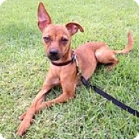 Adopt A Pet :: Daisy - Naples, FL