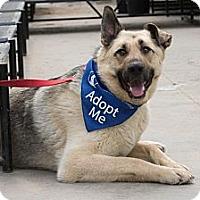 Adopt A Pet :: Timber - Saskatoon, SK