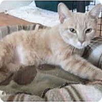 Adopt A Pet :: Mardi - Colmar, PA