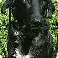Adopt A Pet :: Renior - Staunton, VA