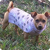 Adopt A Pet :: Lilly - Coral Springs, FL