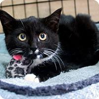 Adopt A Pet :: Nikki - Colmar, PA