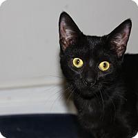 Adopt A Pet :: Oddball/Olivia - Adoption pend - North Branford, CT