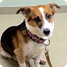 Adopt A Pet :: Sofie