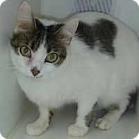 Adopt A Pet :: Jimson - Hamburg, NY