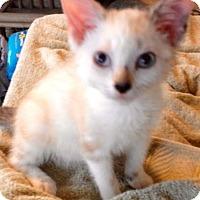 Adopt A Pet :: Brittney - McDonough, GA