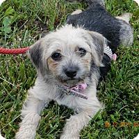 Adopt A Pet :: Alice - MEET HER - Norwalk, CT