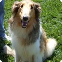 Adopt A Pet :: Skye - Pueblo West, CO