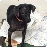 Adopt A Pet :: Jade (2-3 yrs, 12 lb) - Lenore, WV