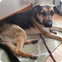 Adopt A Pet :: Jack - Laingsburg, MI