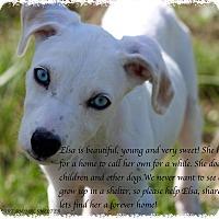Adopt A Pet :: Elsa - Buchanan Dam, TX