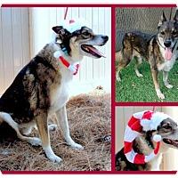 Adopt A Pet :: Yogi - San Diego, CA
