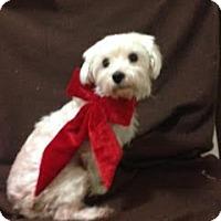 Adopt A Pet :: Snowflake - Turlock, CA