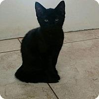 Adopt A Pet :: Joy - Pembroke Pines, FL