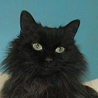 Adopt A Pet :: Raven - Cincinnati, OH