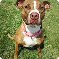 Adopt A Pet :: DAHLIA - New Cumberland, WV