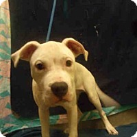 Adopt A Pet :: FROST - Upper Marlboro, MD