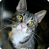 Adopt A Pet :: Mimsy - Appleton, WI