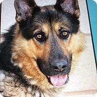 Adopt A Pet :: DUSTIN VON DORF - Los Angeles, CA