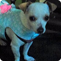 Adopt A Pet :: Daisy - south plainfield, NJ