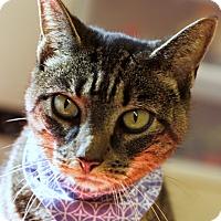 Adopt A Pet :: Sparkle - Mayflower, AR