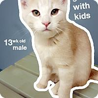 Adopt A Pet :: Blizzard - Chaska, MN