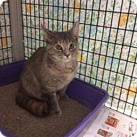 Adopt A Pet :: Hoopla - Janesville, WI