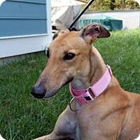 Adopt A Pet :: Tanya - Spencerville, MD