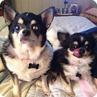 Adopt A Pet :: Suzy, Clementine - Barrington, RI