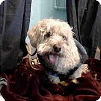 Adopt A Pet :: Sully - Encino, CA