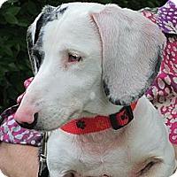 Adopt A Pet :: OAKLEY - Portland, OR