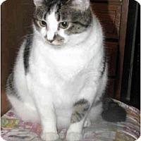 Adopt A Pet :: Rita - Xenia, OH