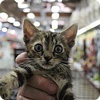 Adopt A Pet :: annabelle - Santa Monica, CA