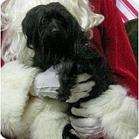 Adopt A Pet :: Lucy Liu - San Angelo, TX