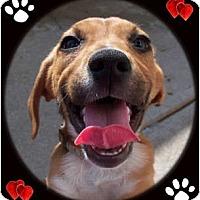 Adopt A Pet :: Ellie Mae - Cincinnati, OH