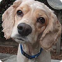 Adopt A Pet :: Carter - Sugarland, TX