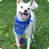 Adopt A Pet :: Sundae - Mocksville, NC
