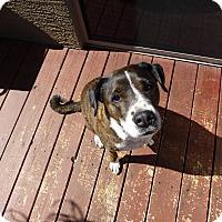 Adopt A Pet :: Zeus - Gilbert, AZ