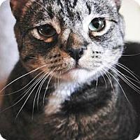 Adopt A Pet :: Buttons - Prescott, AZ